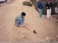 monterey_Penisula_17_miles_drive10_squirrel_rey