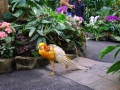 vancouver_bloedel_floral_conservatory07_bird130
