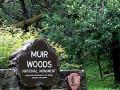 muir_woods02_120
