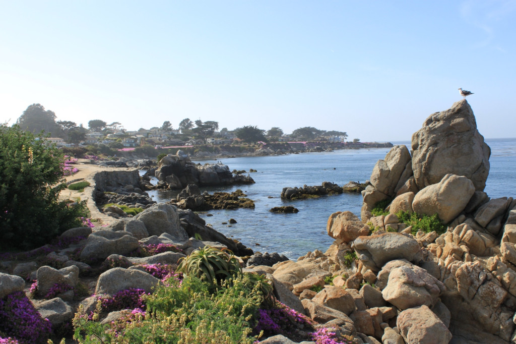 Monterey-Peninsula-May-2012-16