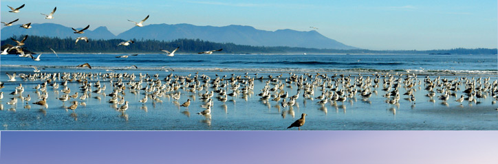 vancouver_island_banner